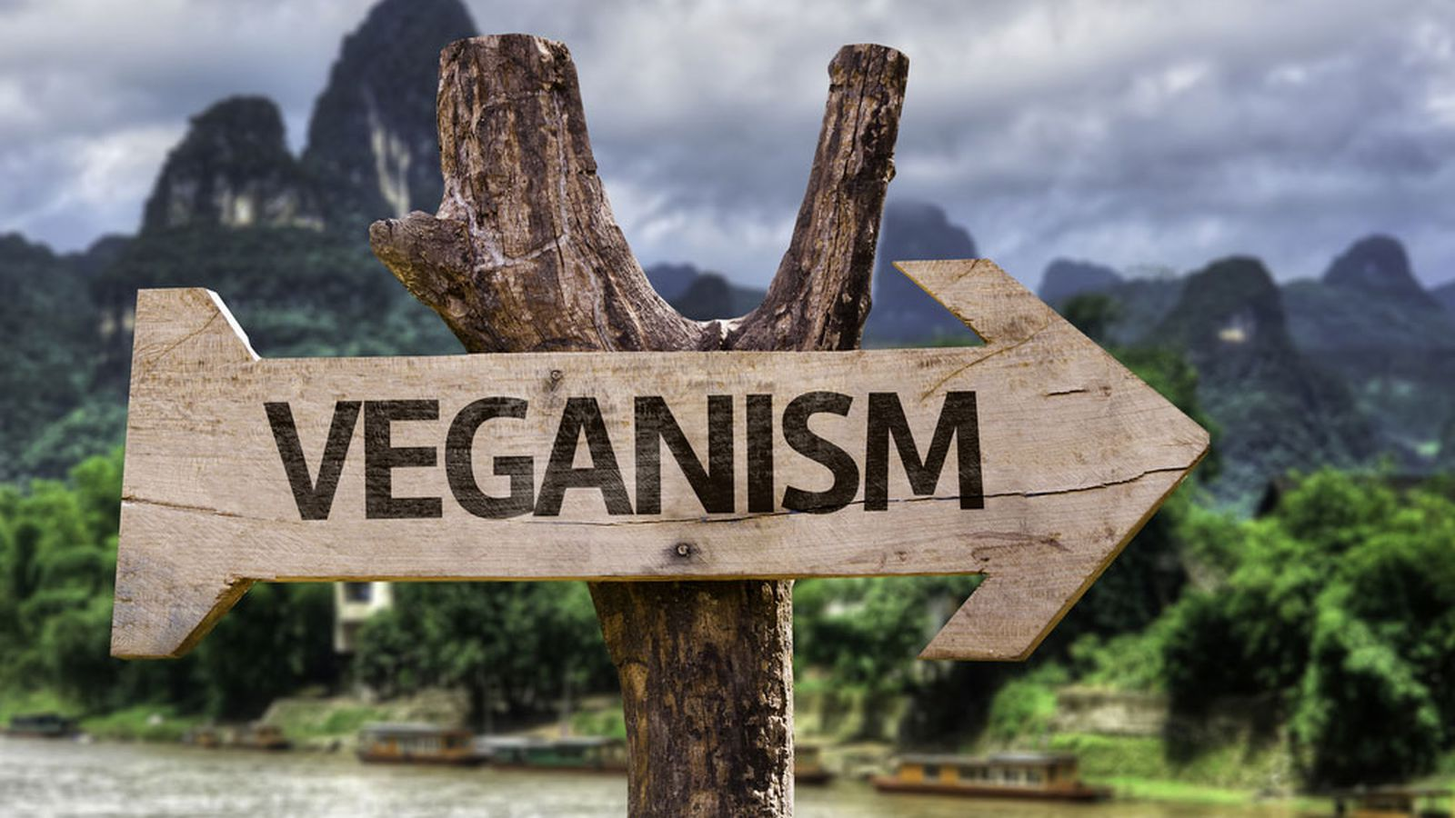 UN Says Veganism Can Save the World from Destruction