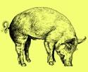 2013_01_meatweek.jpg