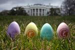wh-egg-roll-2011-150.jpg