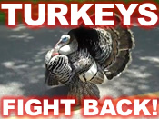 turkeys-fight-back-ql.jpg