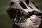 natural-history-museum-150.jpg