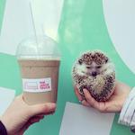 juicetruckhedgehog.png