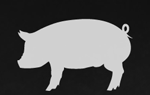 cochon-555-logo-ql.png