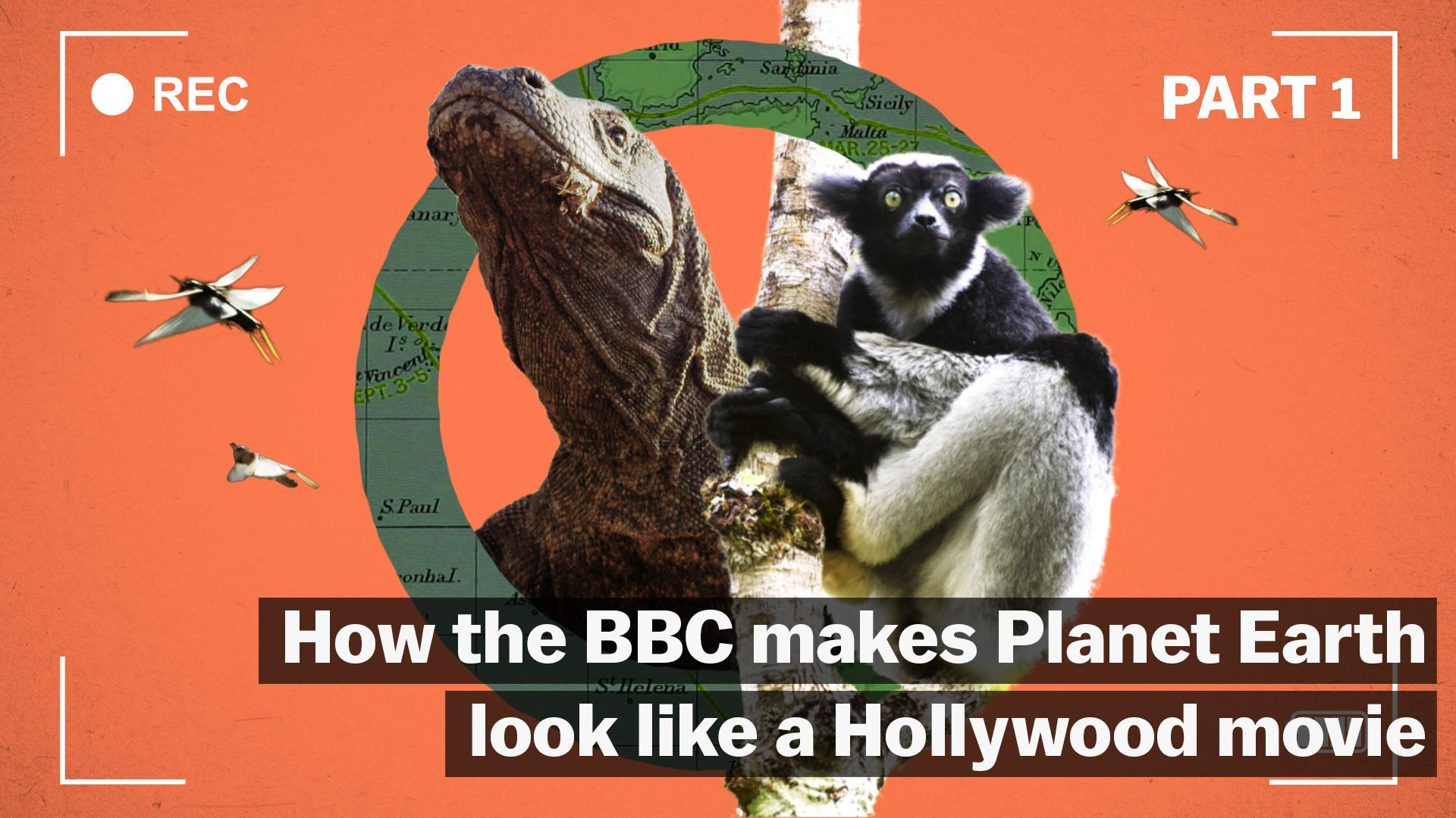 How the BBC makes wildlife films that look like Hollywood movies - Vox