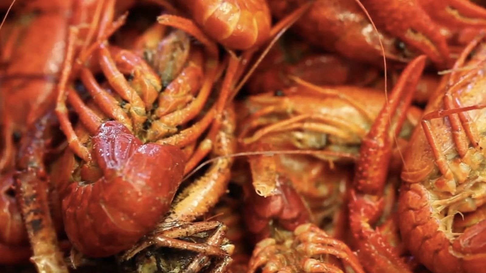 Thumbnail for How Vietnamese Cooks Upped the Ante on the Cajun Crawfish Boil