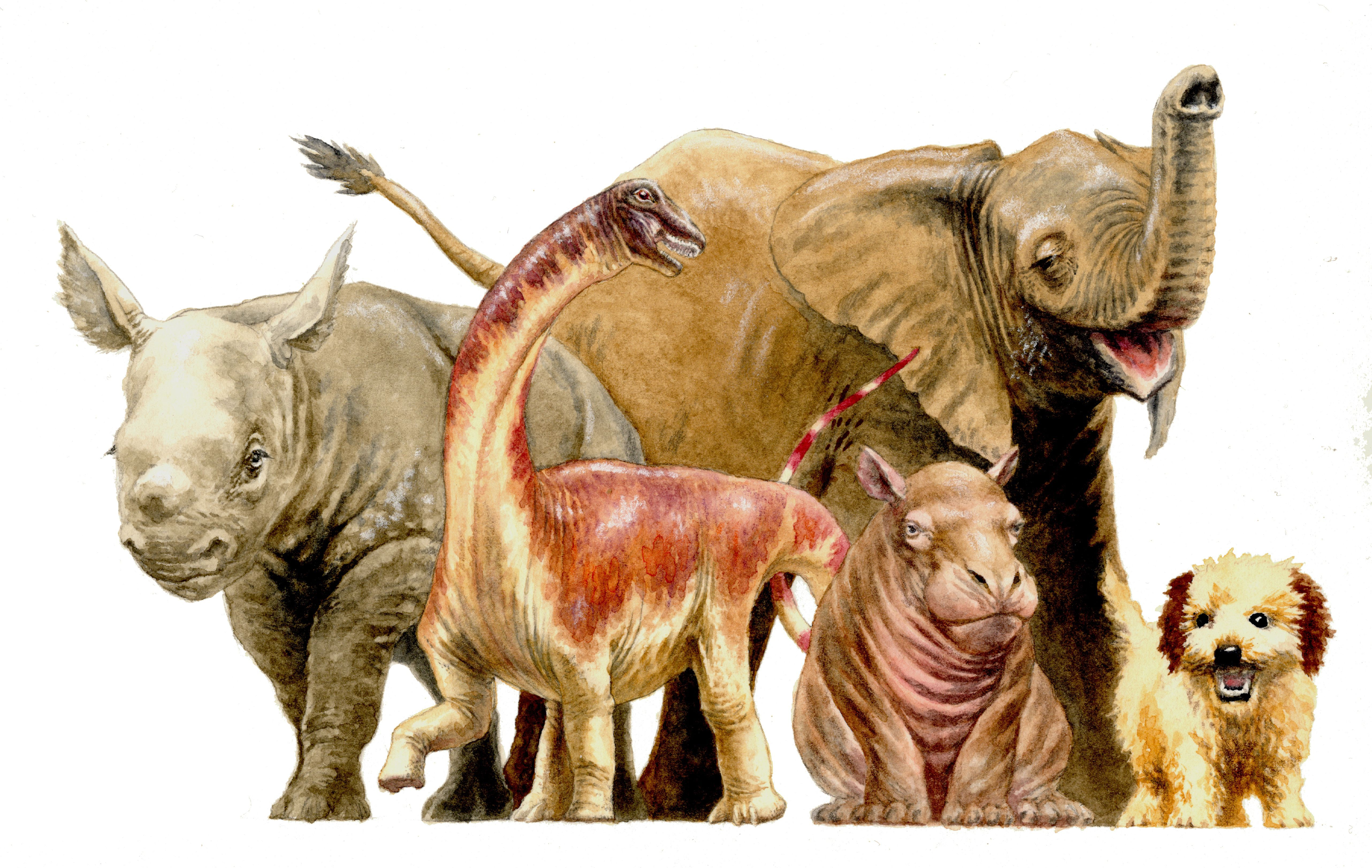 Baby dinosaur fossils reveal rapid growth of gigantic creatures