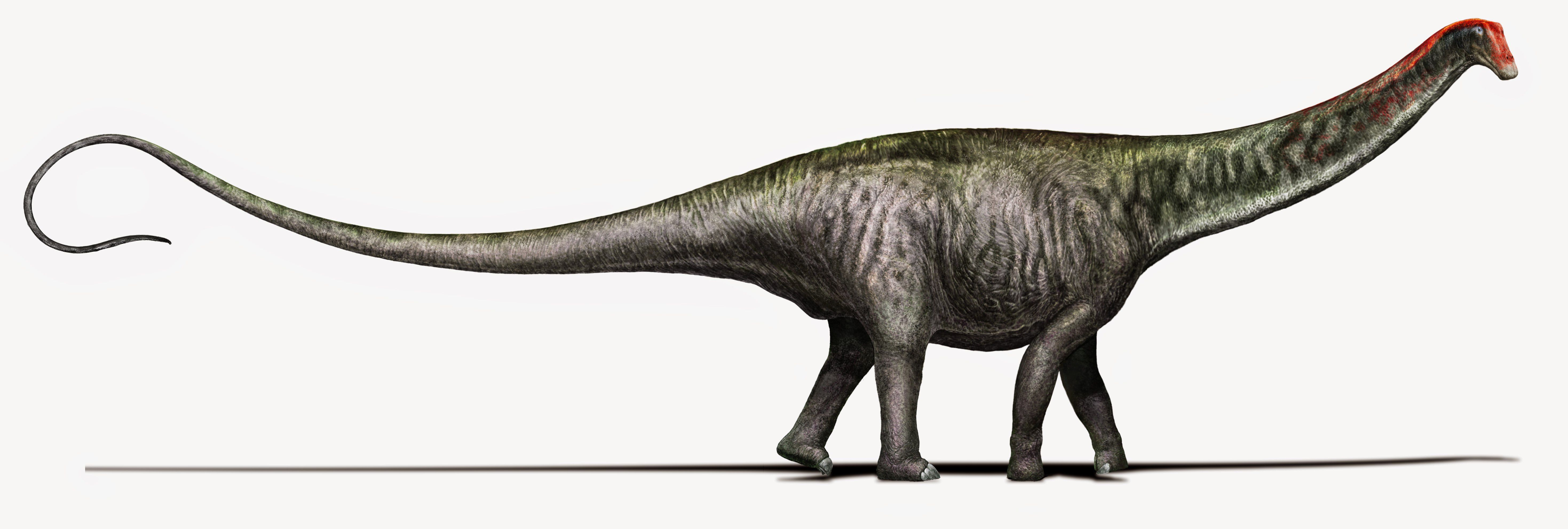 Scientists resurrect the brontosaurus name with a bit of - Dinosaure diplodocus ...
