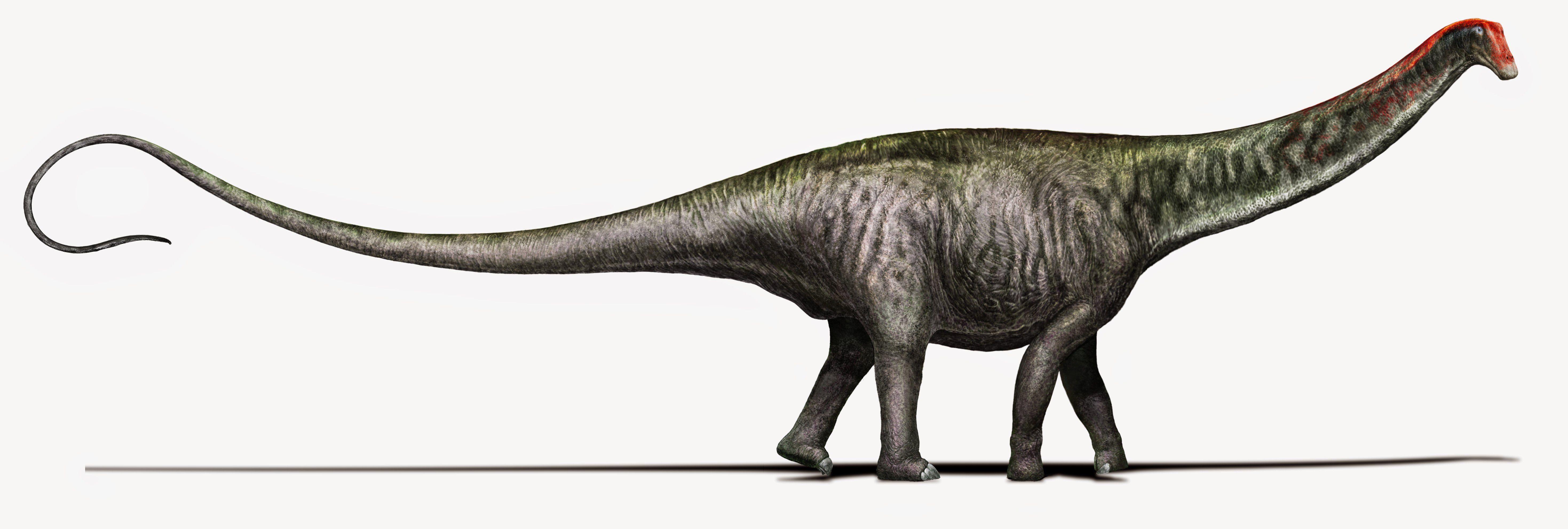 apatosaurus vs diplodocus - HD5876×1983