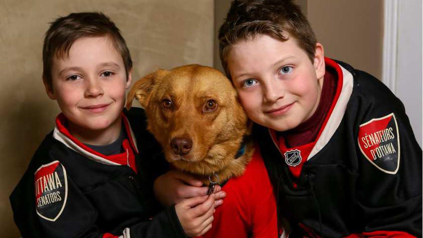 Hockey_dog.0.0