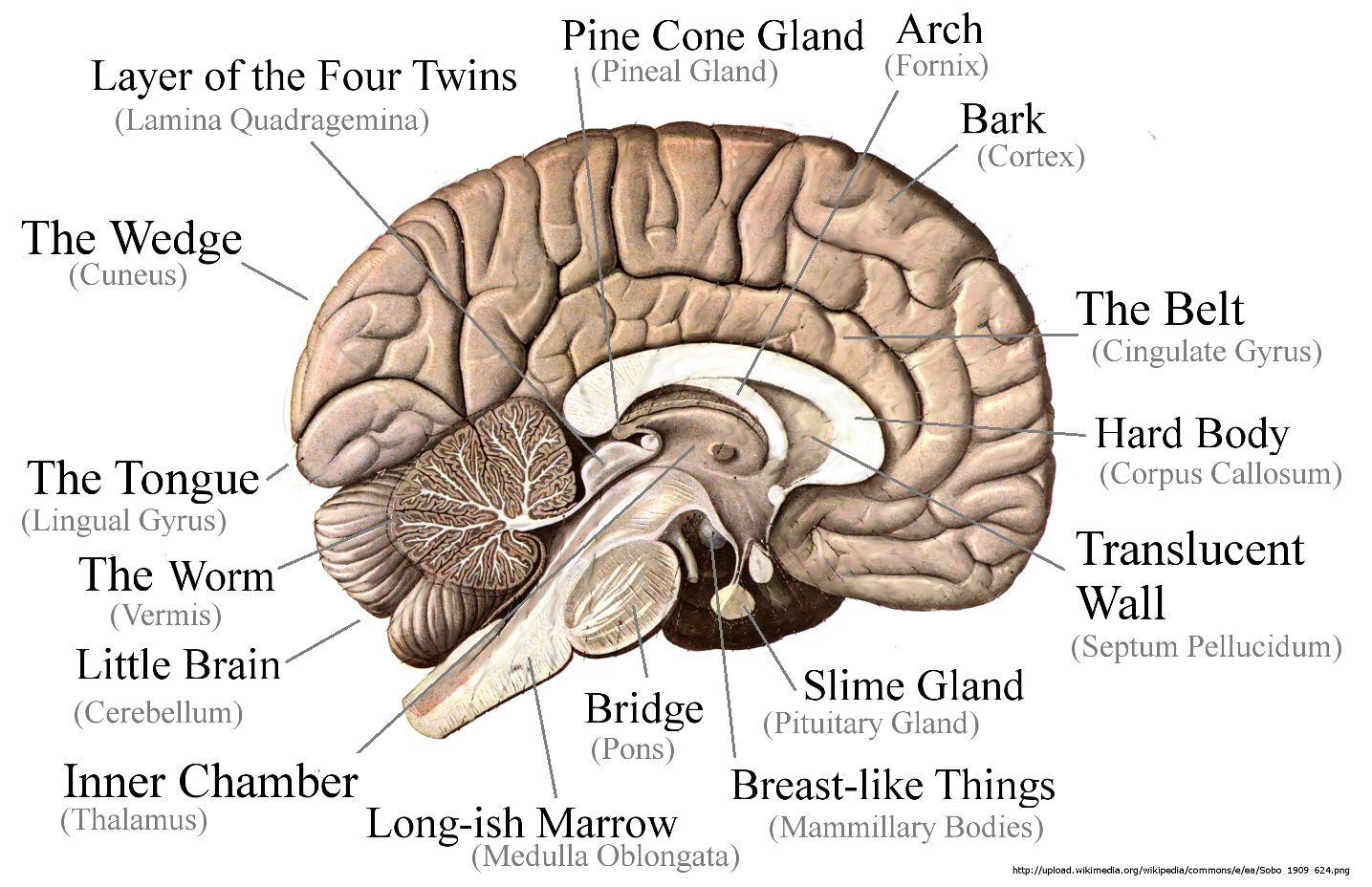 """Did you know there's a part of your brain called """"the ..."""