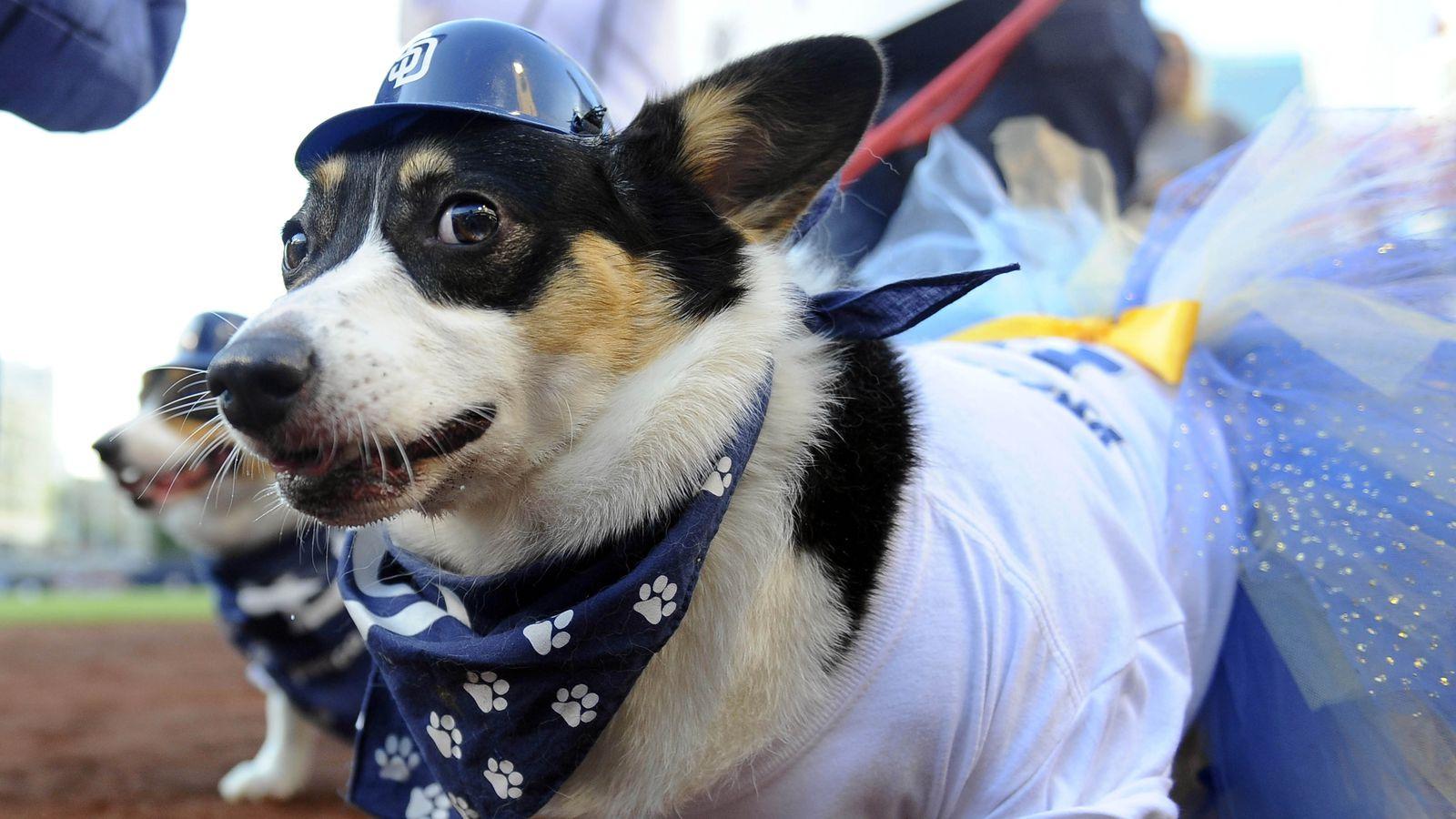 Dogs At Baseball Parks