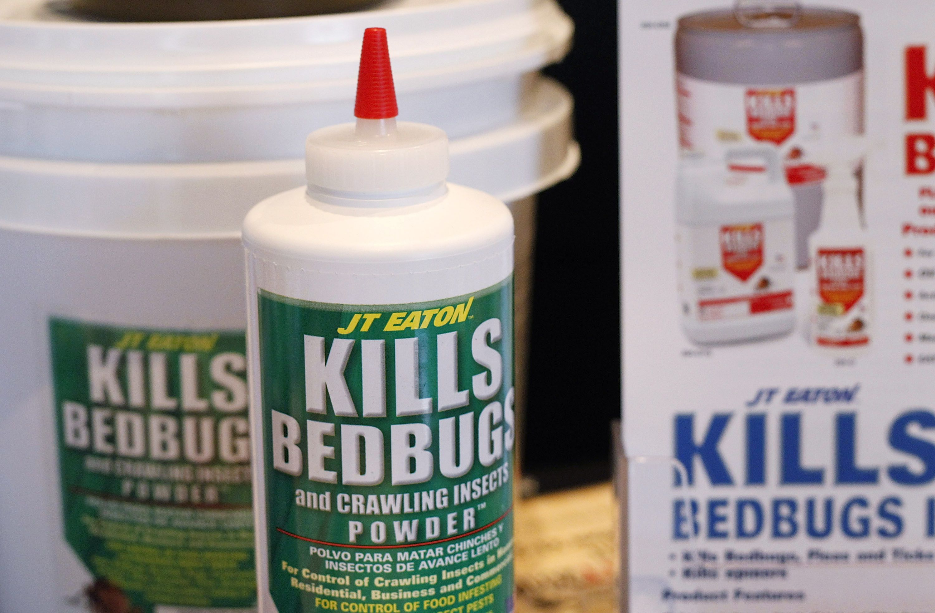 Why Bed Bugs Have Made A Horrifying Comeback Vox