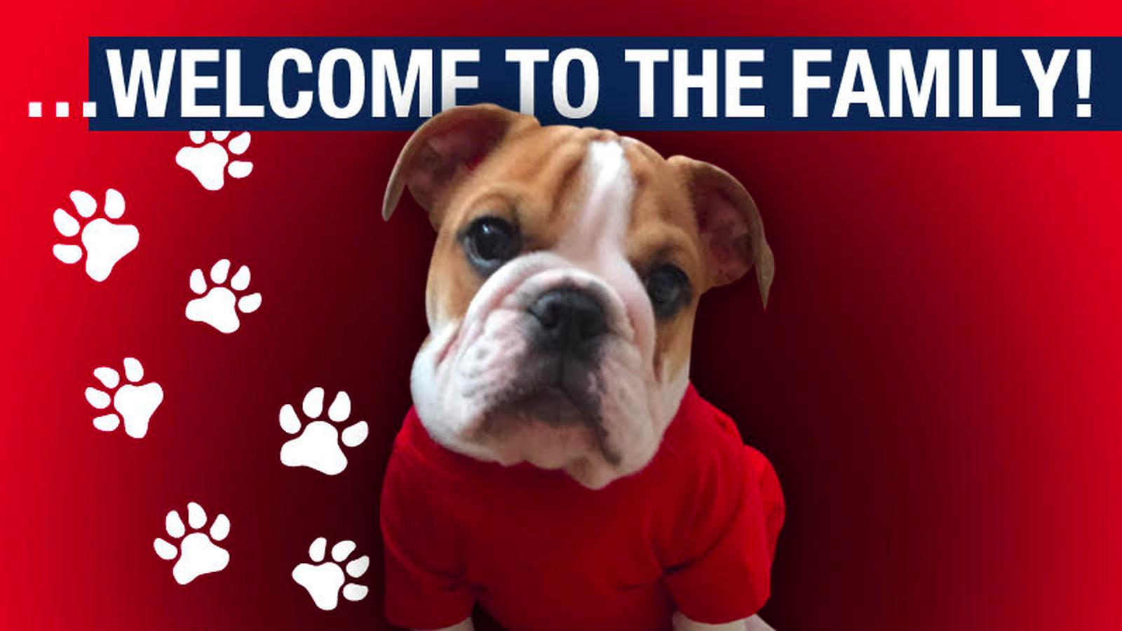 Fresno State Got An Adorable New Bulldog Puppy Mascot