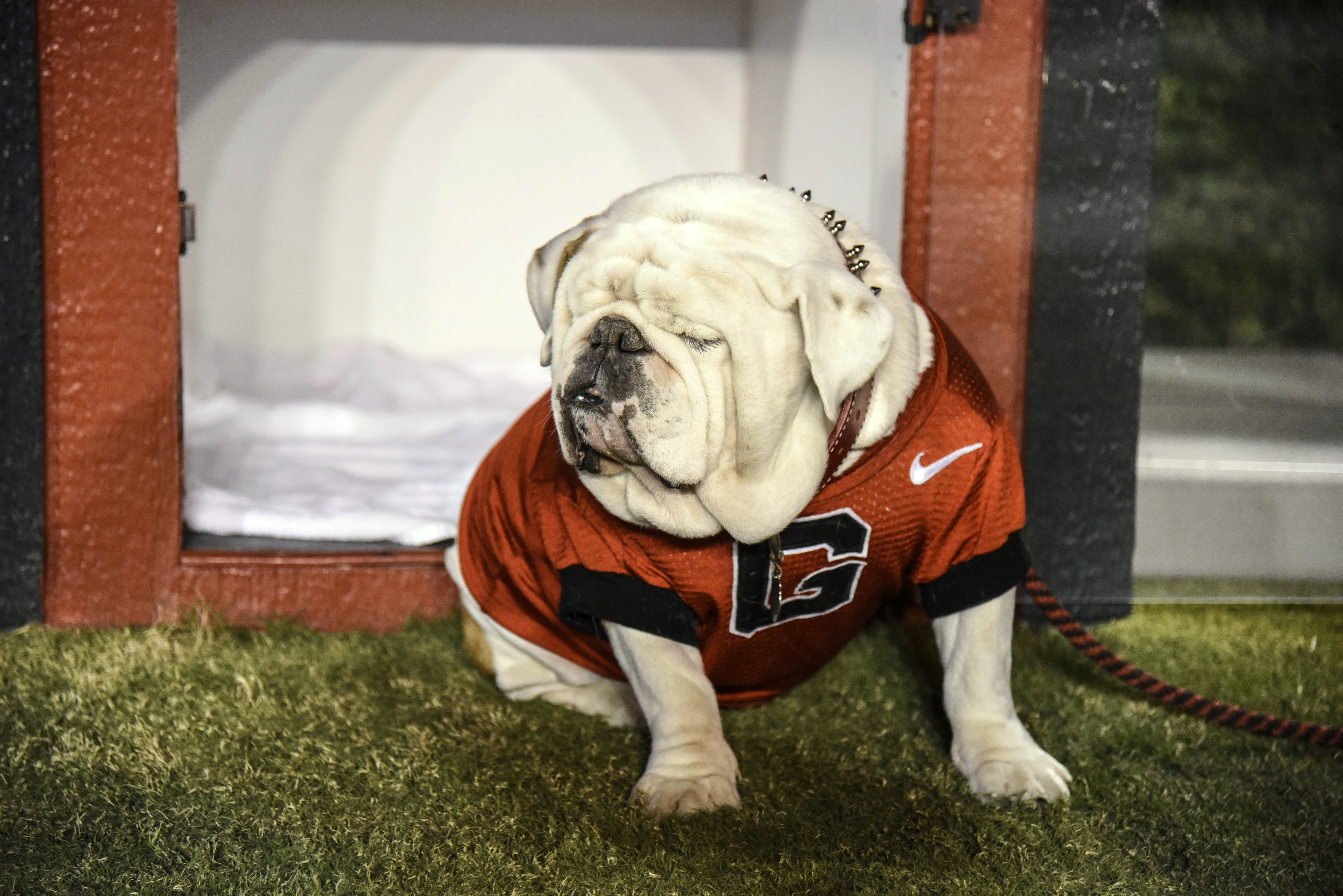Ranking College Footballs 28 Live Dog Mascots College
