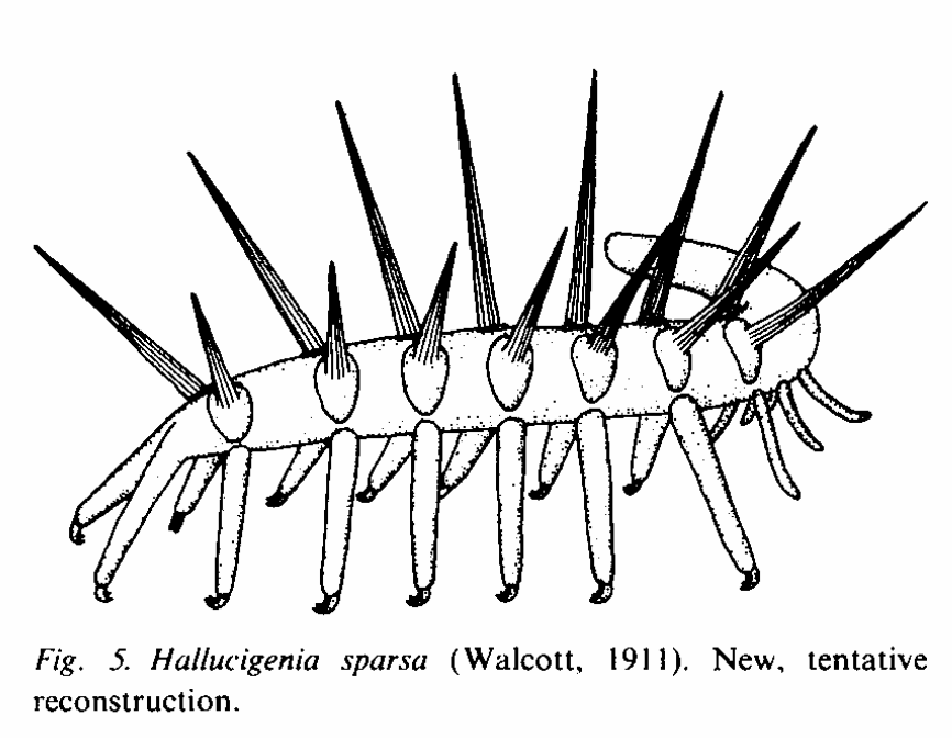 After 50 Years Scientists Discover Head Of The Insane Hallucigenia