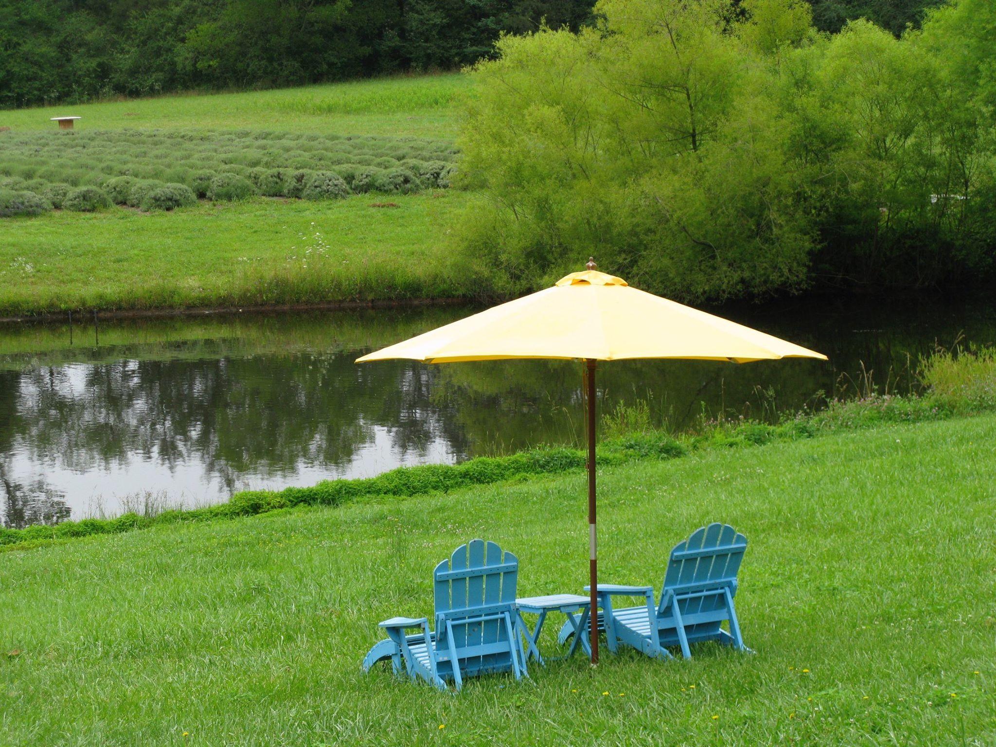 Win This Sweet Organic Farm With A  word Essay Curbed Essay Contest Farm Bluebird Hill North Carolina  Win A House Essay Contest Organic Farm