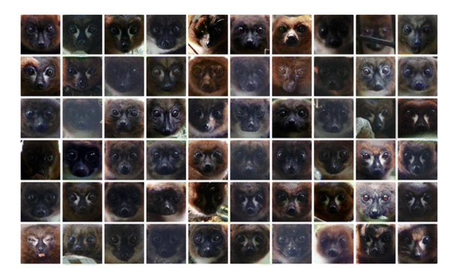 Facial recognition software for lemurs could help save endangered species